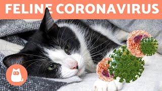 FELINE CORONAVIRUS - Can it Transfer to Humans?