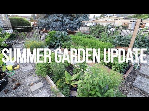 Absolute Abundance In The Summer Garden