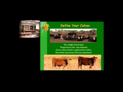 , title : 'Corn silage: How much can you feed to a calf?