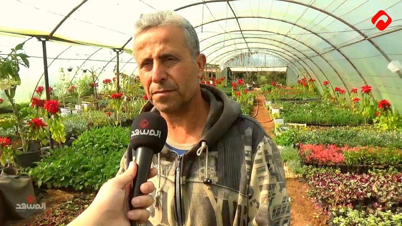 بعد نجاحه في زراعة المتة .. مزارع يُنتج ثمار القهوة والشوكولا الطبيعية في الساحل السوري