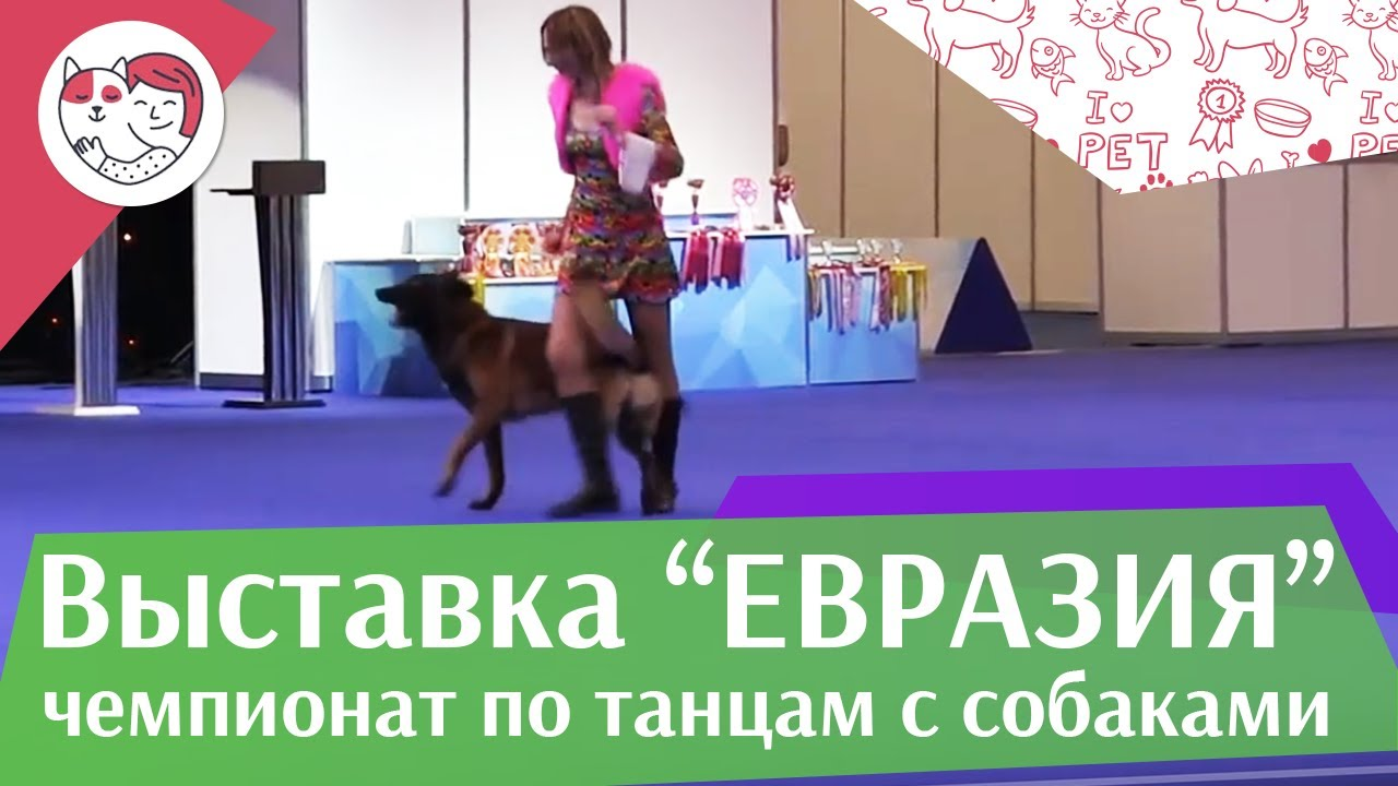 Чемпионат РКФ по танцам с собаками 9 на Евразии 17 ilikepet
