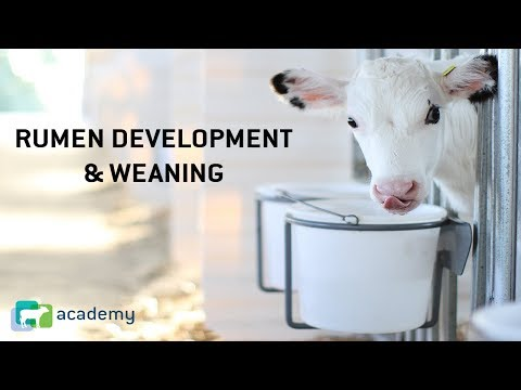 , title : 'Rumen Development and Weaning in Dairy Calves