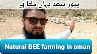 Honey framing in Oman, it's a good business | پیور شھد عمان میں یہاں ملتا ہے