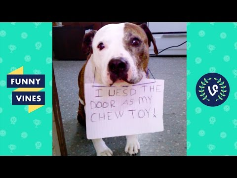 Best GUILTY Pets & Animals Compilation   Funny Vines