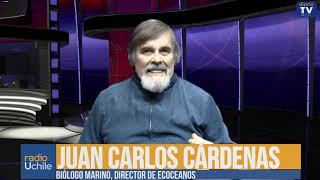Juan Carlos Cárdenas: Boicot al consumo de salmón químico industrial