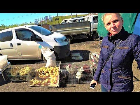 Дела житейские про курей, кролей, поросей, картошку и грядки под сибирские арбузы
