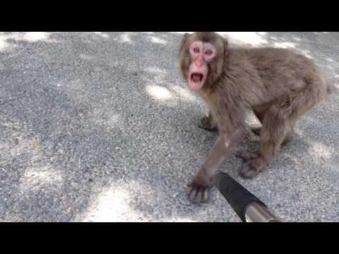 Oh it's a OITA [#34 SAL(monkey) + SELFIE = SALFIE !]
