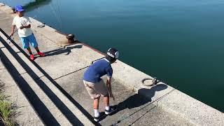 釣りにやってきた島キャンまなポート山口県周南市