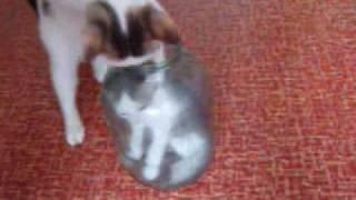 достанет ли кошка котёнка из банки ?