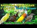 Download Lagu MASTERAN Kompilasi Cililin, Kenari, Lovebird, Kapas Tembak JUARA 1 Terapi Air Mengalir 1 Jam FULL!! Mp3 Free
