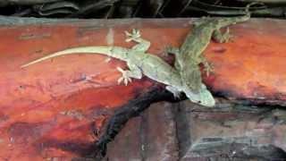 preview picture of video 'Защита от змей в Восточной Африке'
