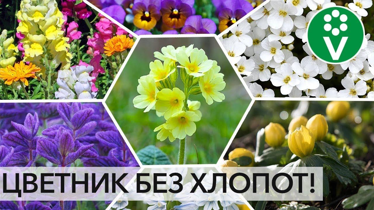 ПОСЕЙТЕ РАЗ И НАВСЕГДА! Лучшие цветы, которые размножаются сами!