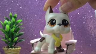 LPS: Q&A (Berries & Summer Fun!) ft. Justin |#Askpuppylover863