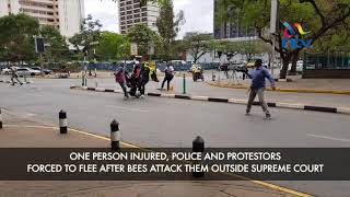Bees attack police, protesters outside Supreme Court - VIDEO