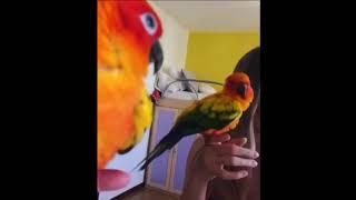 Ну нахер смешные попугаи очень страшное кино приколы ржач
