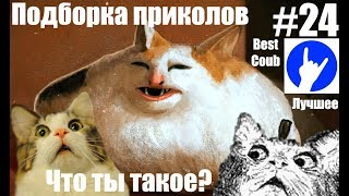 Подборка приколов #24 BEST COUB ЛУЧШЕЕ КУБЫ НЕДЕЛИ