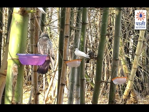 A Couple's Ingenious Plan to Quench Birds' Thirst (Hindi)