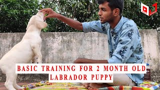 Day 1 training for 2 month old labrador puppy | Open Jungle