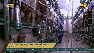 Цифровую молочно-товарную ферму открыли в СКО