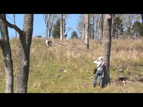 Raising Kiko Goats At Lookout Point Ranch Naijafy