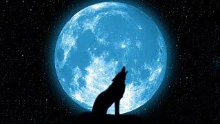 Bad Wolf Channel Trailer