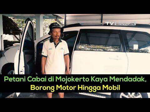 Petani Cabai di Mojokerto Kaya Mendadak, Borong Motor Hingga Mobil