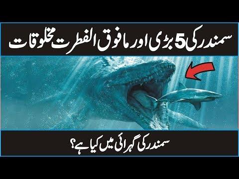 5 Most Giant Sea Creatures You've Ever Seen in Urdu Hindi