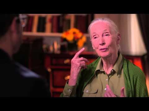 Jane Goodallová a milion odběratelů