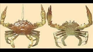 crabs for christmas david deboy