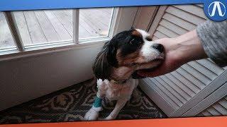 My Dog has Pancreatitis