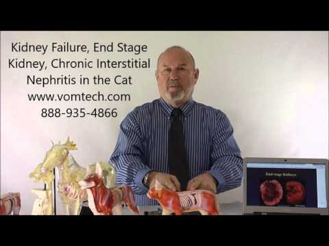 Video Kidney Failure, End Stage Kidney, Chronic Interstitial Nephritis in the Cat