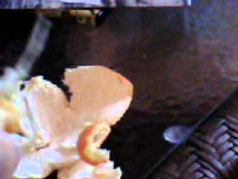 Uovo un verme in Calais il quadro
