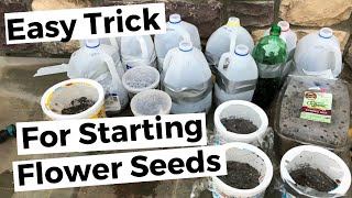 Easy Trick For Starting Flower Seeds - Winter Sowing in Zone 6