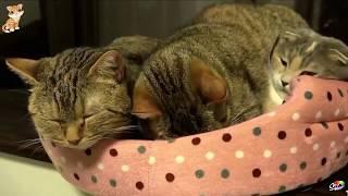 СМЕШНЫЕ ЖИВОТНЫЕ КОТ! Наш новый забавный смешной веселый котенок приколы с кошками