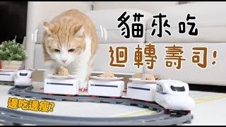 【黃阿瑪的後宮生活】貓來吃迴轉壽司!順便減肥!