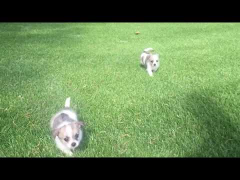Toby loves to run in the grass and chase his brother