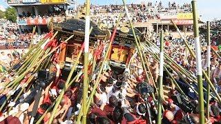 神輿ぶつけ合う「灘のけんか祭り」に歓声