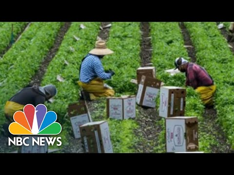In-Depth Look At Coronavirus Testing Challenges Among Latino Farm Workers | NBC Nightly News