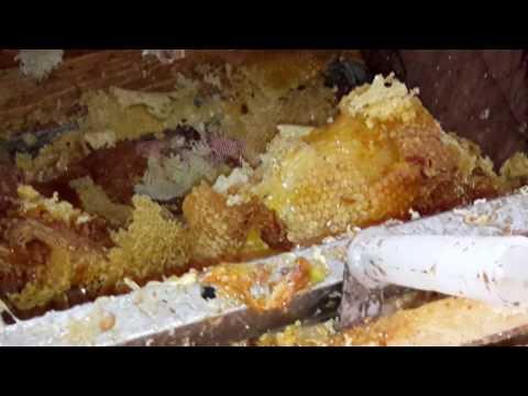 Съем магазинов и выдув из них пчел воздуходувкой и откачка меда 2016