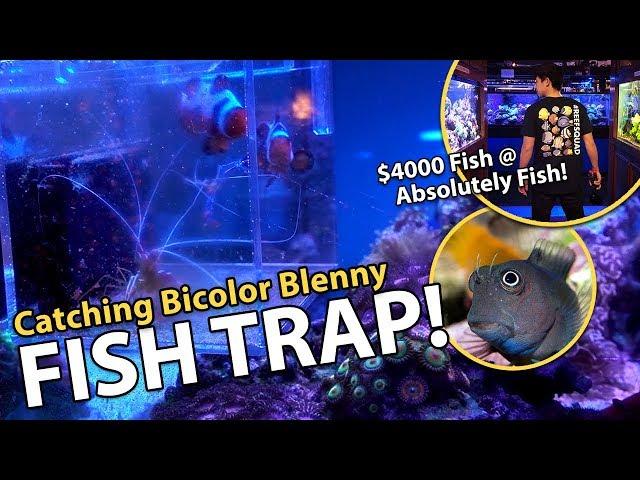 Catching fish in stocked reef tank!! {emotional}