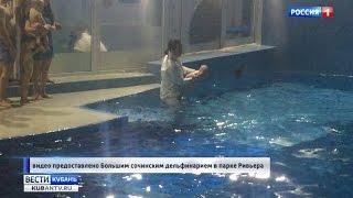 На Крещение освятили воду в сочинском дельфинарии