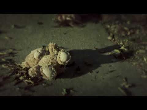 The Walking Dead: Season 1 - Opening Credits