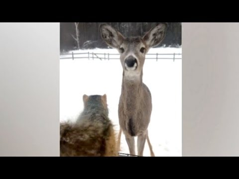 Funny WEIRD ANIMALS and their funny UNBELIEVABLE MOMENTS