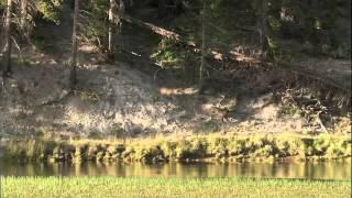 Yellowstone   Battle for Life winter summer  720p HD | Kholo.pk