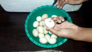 DIY - Egg Incubator Simple And Easy