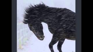 Sixteen Horsepower - Partisan