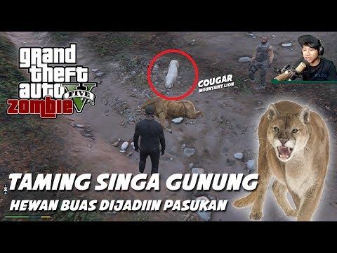 GTA 5 ZOMBIE SURVIVAL MOD CARI SINGA DI HUTAN NGERI ANJIR TAMINGNYA   Part 48