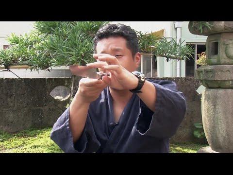 , title : 'Производство ножей Samura в Японии'