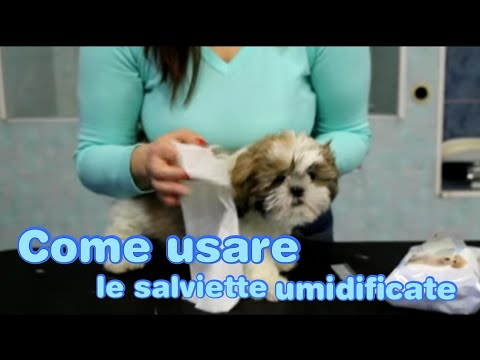 Toelettatura del Cane: Salviette umide e pettine, come usarli? - play dog