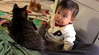 赤ちゃんを優しく叱る猫さん 【猫さんと赤ちゃんはお友達】